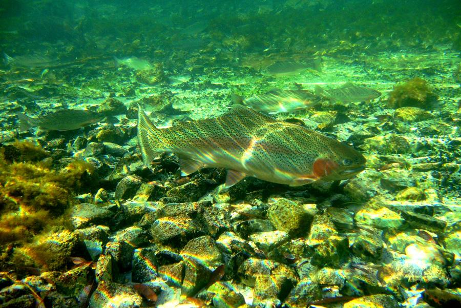 Buceo en el Río Grande - Trevelin