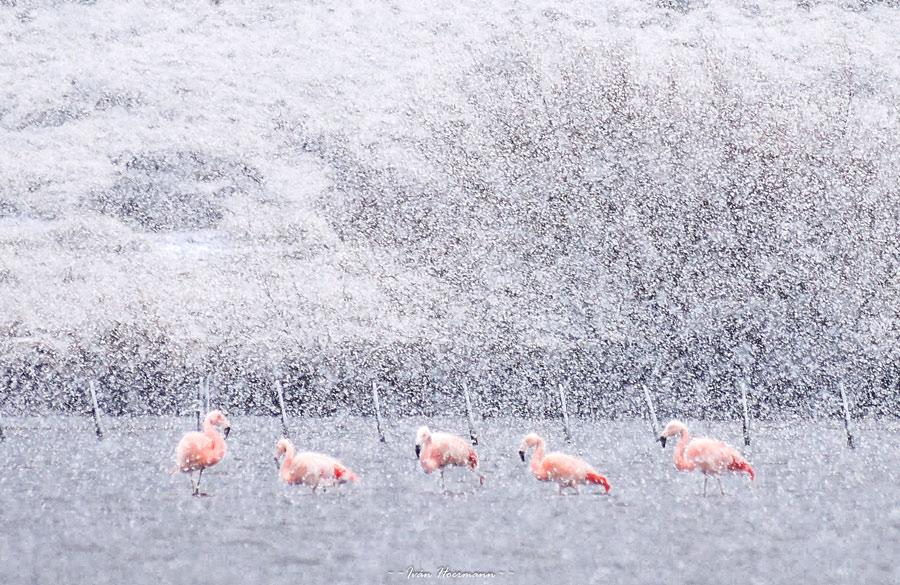 Safari Fotográfico - Trevelin